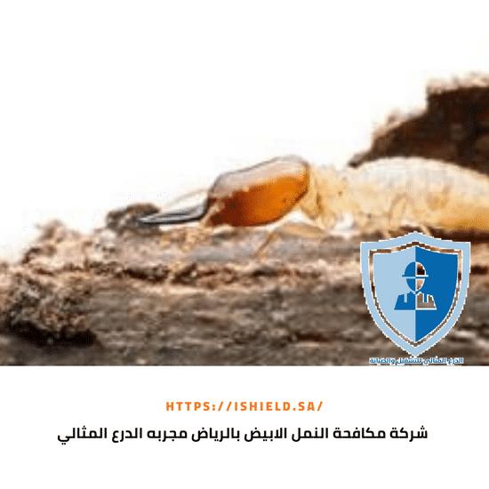 شركة مكافحة النمل الأبيض بالرياض مجربة