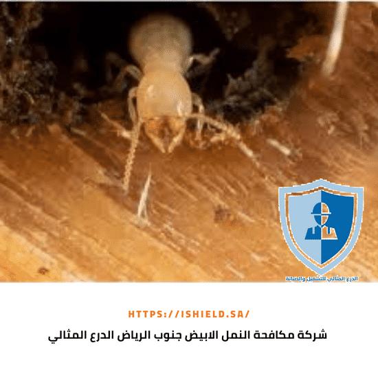 شركة مكافحة النمل الأبيض جنوب الرياض