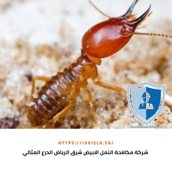 شركة مكافحة النمل الأبيض شرق الرياض