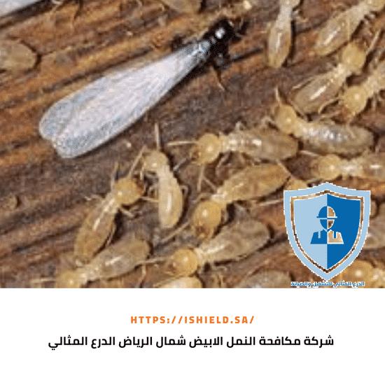 شركة مكافحة النمل الأبيض شمال الرياض