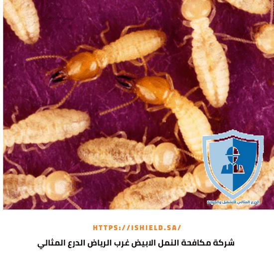شركة مكافحة النمل الأبيض غرب الرياض