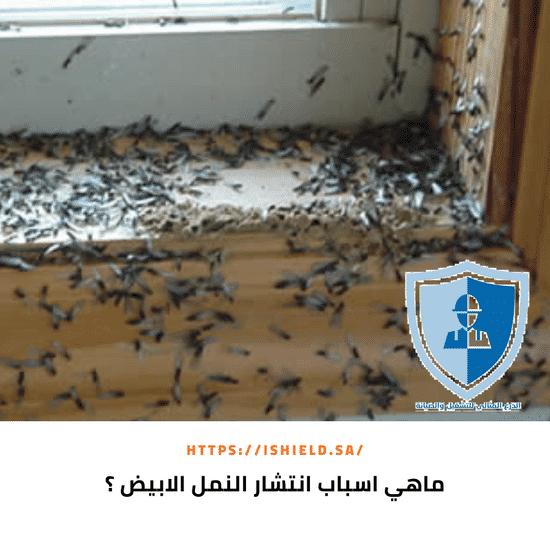 ما أسباب أنتشار النمل الأبيض