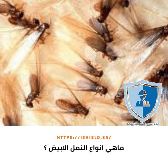 ما هي أنواع النمل الأبيض