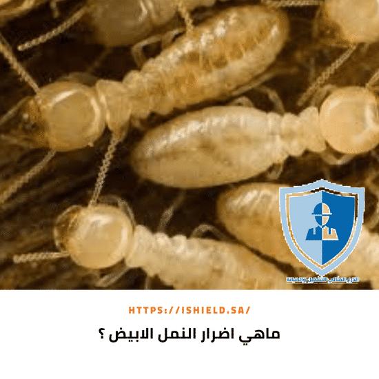 ما هي اضرار النمل الأبيض ؟