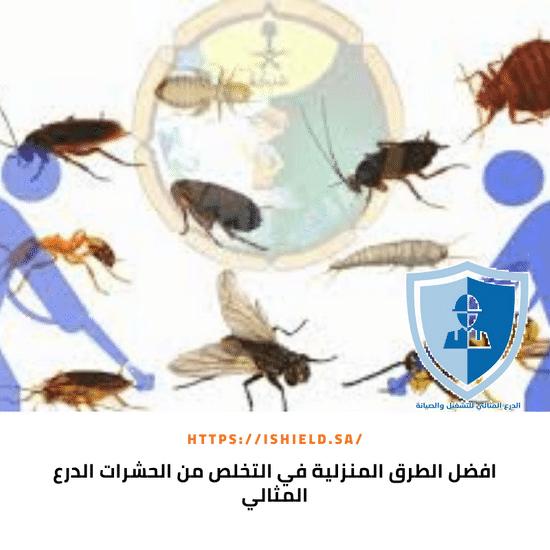 أفضل الطرق المنزلية في التخلص من الحشرات