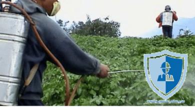 ارخص شركة رش مبيدات بالرياض