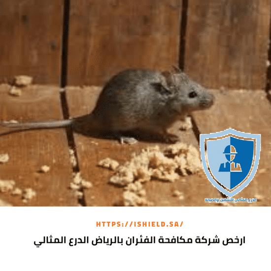 ارخص شركة مكافحة فئران بالرياض