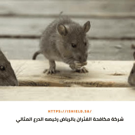 شركة مكافحة الفئران بالرياض رخيصه