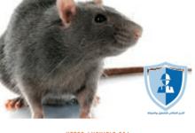 Photo of شركة مكافحة فئران بالرياض – 920008956