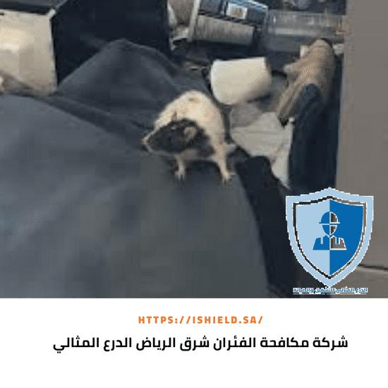 شركة مكافحة الفئران شرق الرياض
