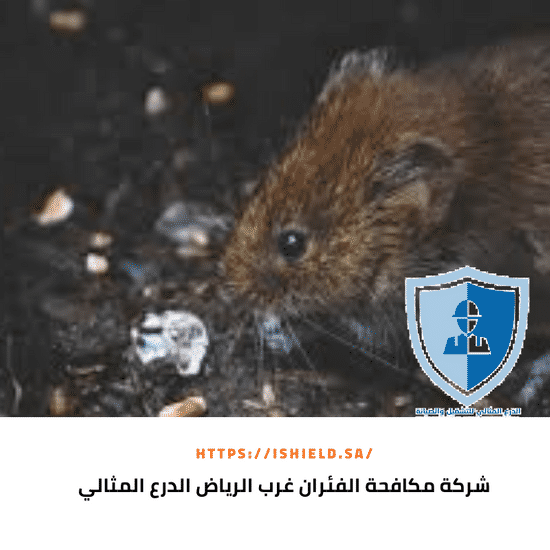شركة مكافحة الفئران غرب الرياض