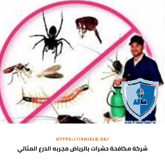 شركة مكافحة حشرات بالرياض مجربة
