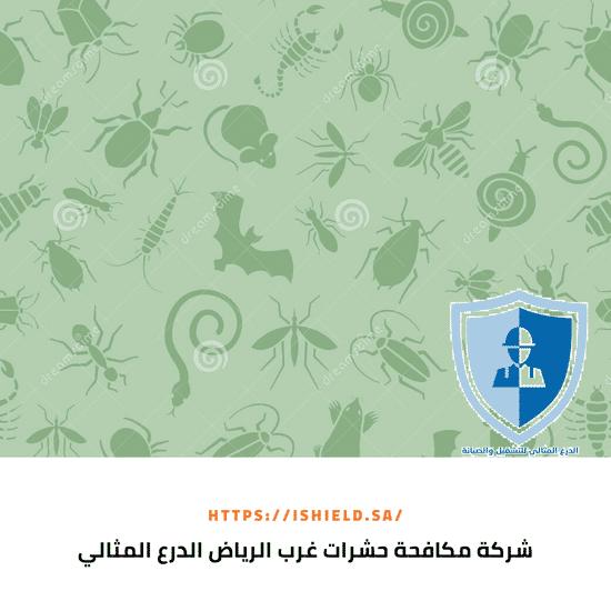 شركة مكافحة حشرات غرب الرياض